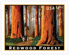 Redwood Forest | Stamp Issue | USA Philatelic