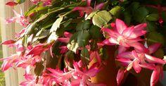 Paradis, Green, Interiors, Plant, Canning