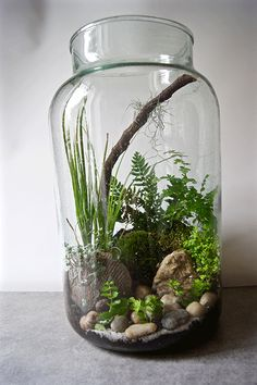 Galerie Terrariums | Le coin jardin. Une grande jarre permet de créer un joli terrarium.