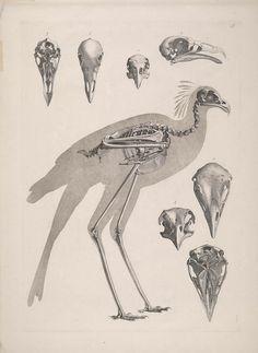 n476_w1150 | Flickr - Photo Sharing! [Die vergleichende Osteologie /. Bonn :In Commission bei Eduard Weber,1821-1838.. biodiversitylibrary.org/page/40170758