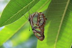Butterfly Photography. Insect Nature Photograph. Neutral Fine Art.