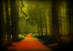 Mystical Forest, Oberbantenberg, Germany