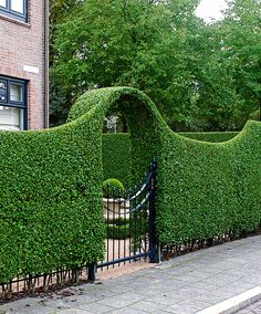The word topiary is not common among many people. It is simply a way to give proper shape to the hedges and trim them in a perfect manner. This art of giving proper shape to the hedges is quite popular in all over the world. Garden Hedges, Garden Gates, Topiary Garden, Herb Garden, Vegetable Garden, Front Yard Landscaping, Backyard Landscaping, Landscaping Ideas, Country Landscaping