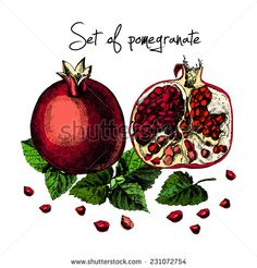 Set of pomegranate. Plant Drawing, Vector Hand, Botanical Drawings, Pomegranate, How To Draw Hands, Christmas Ornaments, Fruit, Holiday Decor, Plants