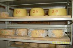 preparazione del formaggio a Malga Tovre