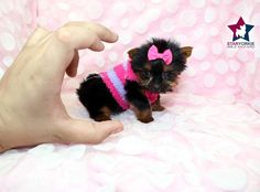 Image from http://www.eonline.com/eol_images/Entire_Site/2014010/rs_560x415-140110182950-1024.Star-Yorkie.ms.011014_copy.jpg.