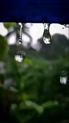 Green Background Video, Love Background Images, Cool Pictures Of Nature, Beautiful Photos Of Nature, Beautiful Words Of Love, Beautiful Songs, Krishna, Love Wallpapers Romantic, Whatsapp Videos