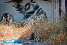 """The Cat and the Graffiti"" ελαιογραφία σε καμβά 1080 X 720 px. Πάλι γάτα; θα μου πεις και δίκιο θα 'χεις. Δεν φταίω εγώ αλήθεια εμφανίζονται μπροστά μου. #cat #instacat #catsofinstagram #catsofathens #graffiti #streetsofathens #athens #athensgreece #athensvoice #we_capture_athens #loves_athens"