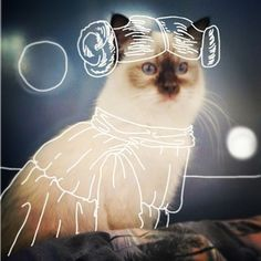 Catster is for cat owners and lovers. Find info on vets or breeds or laugh at funny cats. Photography Editing, Photo Editing, Doodle On Photo, Montage Photo, Draw On Photos, Instagram Artist, Creative Photos, Aesthetic Photo, Funny Cats