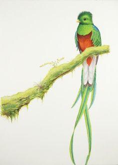 The Resplendent Quetzal.