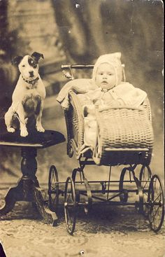 Baby in Beautiful WICKER CARRIAGE With RCA Nipper Dog Watching Protectively Photo Postcard Circa 1910