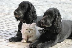 The cat is between the two dogs - photos for teaching spatial concepts - Pinned by @PediaStaff – Please Visit ht.ly/63sNt for all our pediatric therapy pins