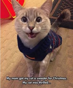 Animal Pictures Meme Dump Of The Day - 5