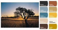 Interior Color Schemes for Global Style: Global Style Color Scheme: Africa