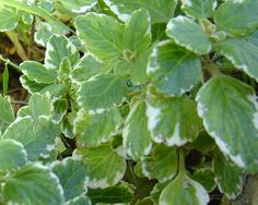Module 10 - List of indigenous herbaceous perennials and ground covers