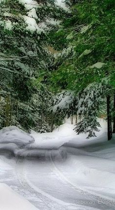 Snowy Road through the Pine Forest