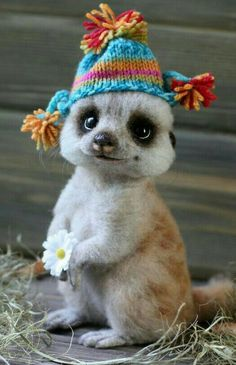 Cute Funny Animals, Cute Baby Animals, Animals And Pets, Cute Cats, Animal Spirit Guides, Spirit Animal, African Animals, Cute Animal Pictures, Cute Creatures