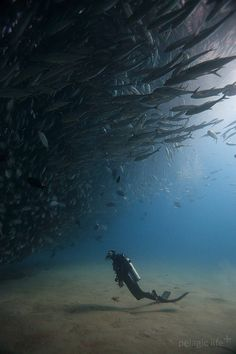 how lucky we #divers are to be able to enter this realm #ocean #scuba Pinned…