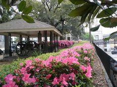 spring in Savannah, GA