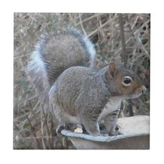 Funny Squirrel Photography Tile #squirrels #photography #tiles #art #animals And www.zazzle.com/naturesmiles*