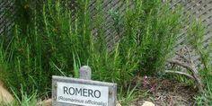 Romero o tomillo, repelentes naturales de insectos para alimentos o plásticos