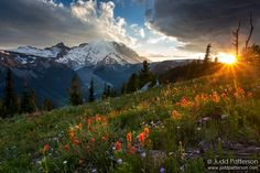 The sun drops behind the last tree near Mount Rainier and a carpet of wildflowers. Final Moments by Judd Patterson on 500px