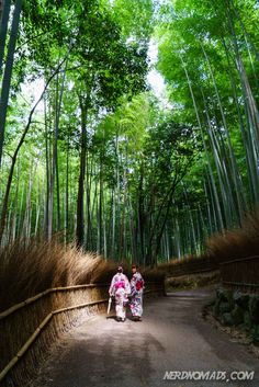 The beautiful bamboo forest in #Kyoto, #Japan.
