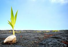 Post-Traumatic Growth  Turning to the Positive: Personal Growth After Trauma   Psychology Today http://www.psychologytoday.com/blog/the-mindful-self-express/201303/turning-the-positive-personal-growth-after-trauma