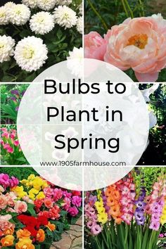 types of flowers How do you know what type of bulbs to plant in the Spring for Summer blooms Read all about the multiple types of bulbs, their flowers and ideal growing conditions Spring Plants, Spring Garden, Spring Flowers, Planting Spring Bulbs, Spring Blooms, Summer Blooming Flowers, Spring Tree, Garden Bulbs, Garden Plants