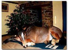 Nothin like waking up to horse under the christmas tree??