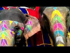 Elephant Festival in Jaipur - Festivals of India
