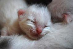 Newborn White Kitten