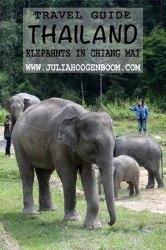 Want to get close to these sweet elephants. Chiang Man is the perfect place and this guide will help you get started on planning your dream, animal friendly, elephant adventure. New Love, Chiang Mai, Southeast Asia, Travel Guides, Elephants, Animals Beautiful, Great Places, Perfect Place, Cuddling