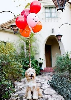 I imagine macy would smile like this if she had balloons on her. maybe.