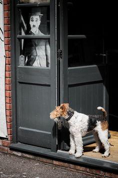 From Sharana to New England — cirrusgazer: Fox Movies, Fox Terrier.