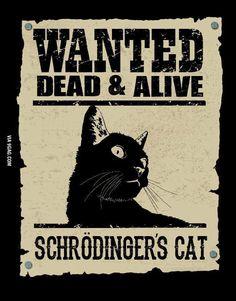 Schrödingers cat.