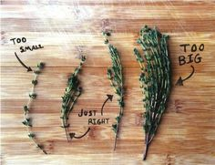 What is a sprig of thyme? | CookingLight.com