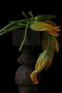 Karlin_Squash Blossoms-260.jpg | Lynn Karlin Photography