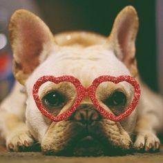 """""""I ❤️ You"""", French Bulldog on Valentine's Day."""