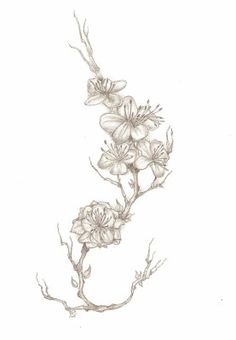 fleurs de cerisier tatouage noir et blanc. Black Bedroom Furniture Sets. Home Design Ideas