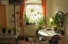 Want to grow indoor plants, but do you know how much light direct or indirect required? Read this educative article on best indoor plants and their light requirements to find out
