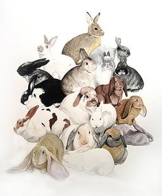 Bunny rabbit pileup