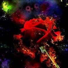 My Rose On Fire by GoldenKun on DeviantArt