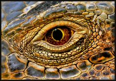 Dragon eye, crocodile, Klaus Wiese