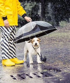 By Gosoaky rainwear Picnic Blanket, Outdoor Blanket, Raining Cats And Dogs, Rain Wear, Dog Cat, Instagram Posts, Kids, Clothes, Style