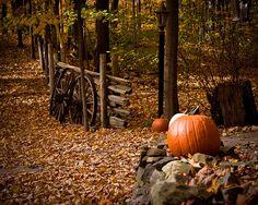 Autumn in the park ? artist: Evgeny Lushpin ? | Pinteres?
