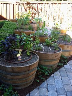 Wine Barrel Planters Are Perfect For Growing Tomatoes You