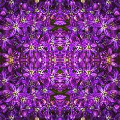 #Symmetrie #Wiederholung #Knoblauch #Blüten