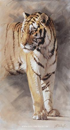 Tiger painting by Guy Coheleach