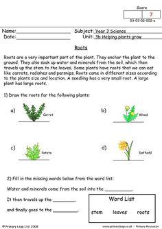 parts of a plant roots information sheet worksheet plants plants. Black Bedroom Furniture Sets. Home Design Ideas
